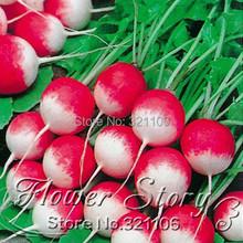 Buy 1 Pack 30+ Seeds Heirloom Healthy Organic Vegetable Garden Radish Seeds One Original Pack for $1.78 in AliExpress store