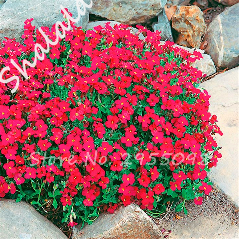 Online Get Cheap Red Ground Cover