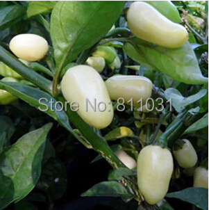 Hot selling 5pcs White Habanero Pepper seed vegetable seeds bonsai plant DIY home garden free shipping(China (Mainland))