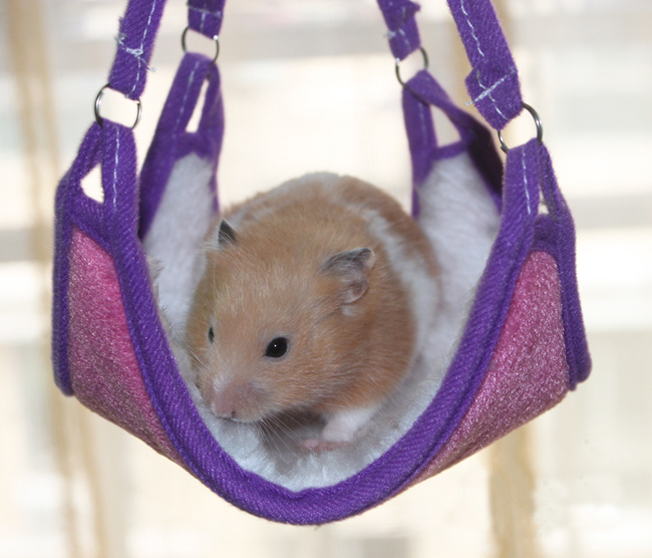 PETS Hamster warm fleece BED & BLANKET OR CARRIER & PLAYING purple pink(China (Mainland))