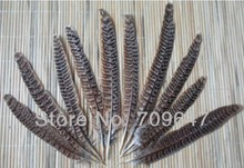 """100Pcs/Lot 6-8"""" 15-20cm Natural Hen Ringneck PHEASANT Quill FEATHERS Craft Millinery Fly Fishing(China (Mainland))"""