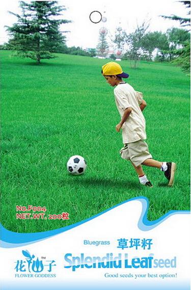 Football Green Lawn Grass Seeds, Original Pack, 200 Seeds / Pack, Short Evergreen Sod Grass #F004(China (Mainland))