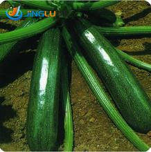 20 Summer Squash black Beauty Zucchini (cucurbita Pepo) Seeds~organic
