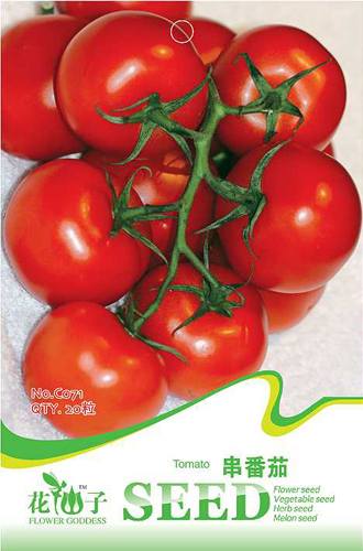 Big Promotion 20 Tomato Non Hybridseeds NON-GMO Healthy and nutritious Free Shipping C071(China (Mainland))