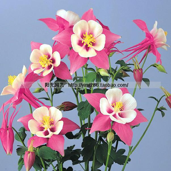 Acquista all 39 ingrosso online fiori perenni ombra da for Fiori perenni