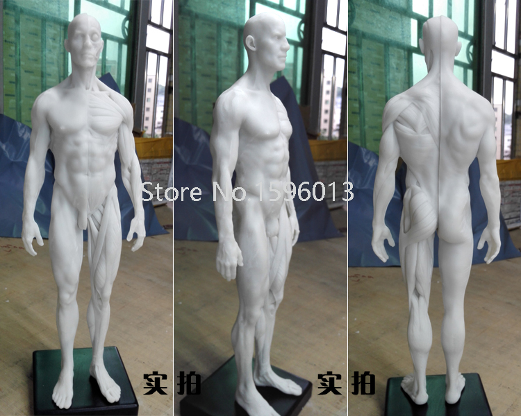 30cm Medical Muscle Anatomical/Anatomy Structure Model Artist Drawing Human male artwork Model(China (Mainland))