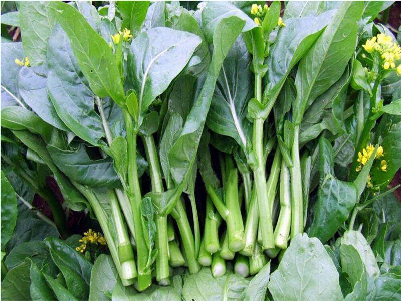 Aliexpress.com : Buy Choy sum, Chinese cabbage, green vegetable seeds ...