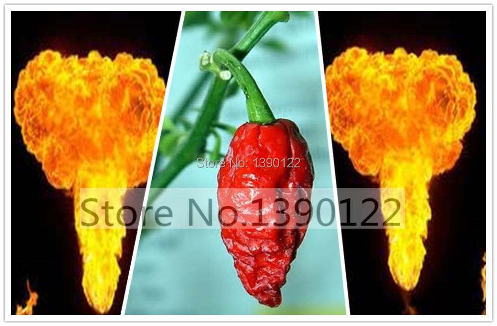 Bonsai vegetable seeds 100pcs seeds Red Bhut Jolokia Seeds Ghost Pepper Naga Jolokia HOT Chilli 900K