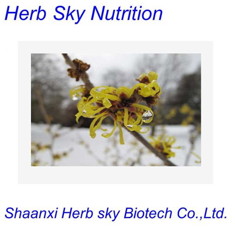 Best Quality Wholesale price Raw material hamamelis virginiana extract 400g/lot<br><br>Aliexpress