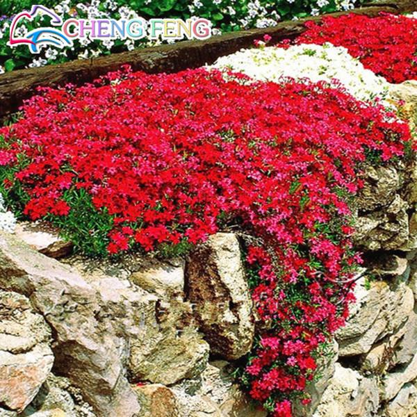 Roche ornementale pour jardin promotion achetez des roche ornementale pour jardin promotionnels - Couvre sol jardin japonais ...