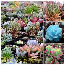300/bag Mix Succulent seeds lotus Lithops Pseudotruncatella Bonsai plants Seeds for home & garden Flower pots planters(China (Mainland))