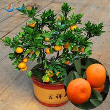 100 Pcs / Bag, Balcony Patio Potted Fruit Trees Planted Seeds, Kumquat Seeds, Orange Seeds, Tangerine, Citrus