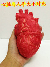 1PCS 18X10cm April Fool's Day Halloween supplies terror human organs entire toy props haunted house horror Simulation heart(China (Mainland))