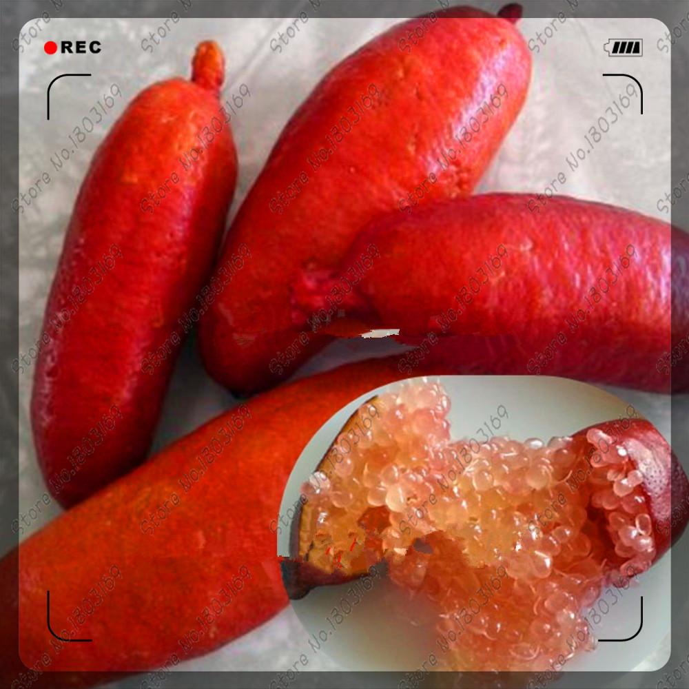 200pcs/bag Ice Pink Finger Fruit Lime Seeds,rare pomegranate seeds,bonsai fruit seeds,for Home Garden Balcony Rare Plants(China (Mainland))