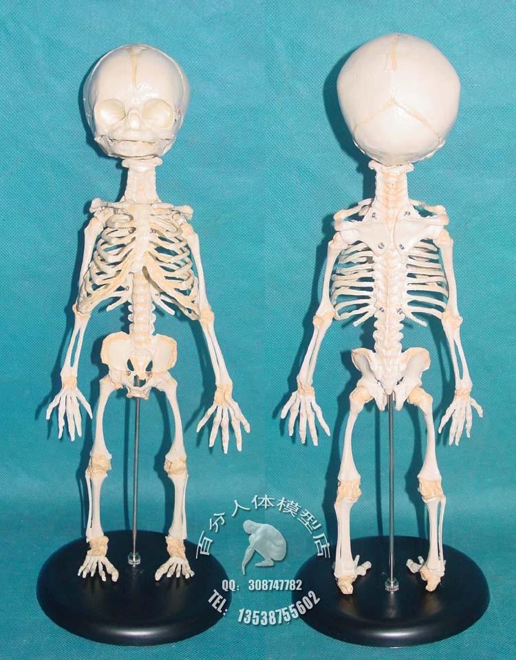 Популярные скелет новорожденного ребенка анатомия вам было удобнее