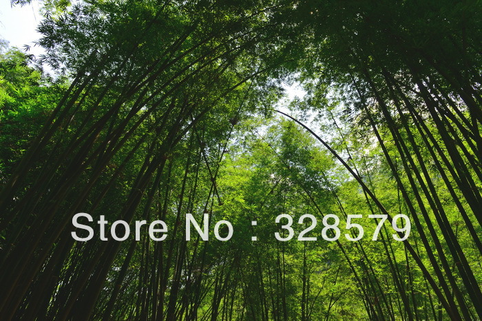 Green Bamboo and Sunshine Printed Film Design#PF-111 from PVC suspend Stretch Ceiling Film System manufacturer,Width is 2.35m(China (Mainland))