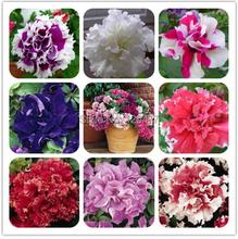 free shipping Petunia petals flower seeds multicolor  -200 pcs