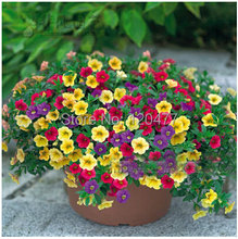 Free shipping Petunia seeds shuttlecock flower horn sweet potato flower bonsai flowers seeds