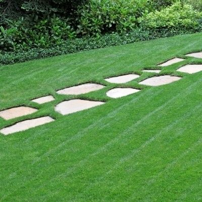 200 pretty Lawns grass Seed low Maintenanceideal lawn Easy Growing for home garden F004(China (Mainland))