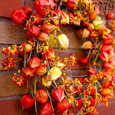 Heirloom 100 Seeds Physalis Chinese Lanterns Winter cherry Husk tomato Orange red Gooseberries Ground family cherries Flower(China (Mainland))