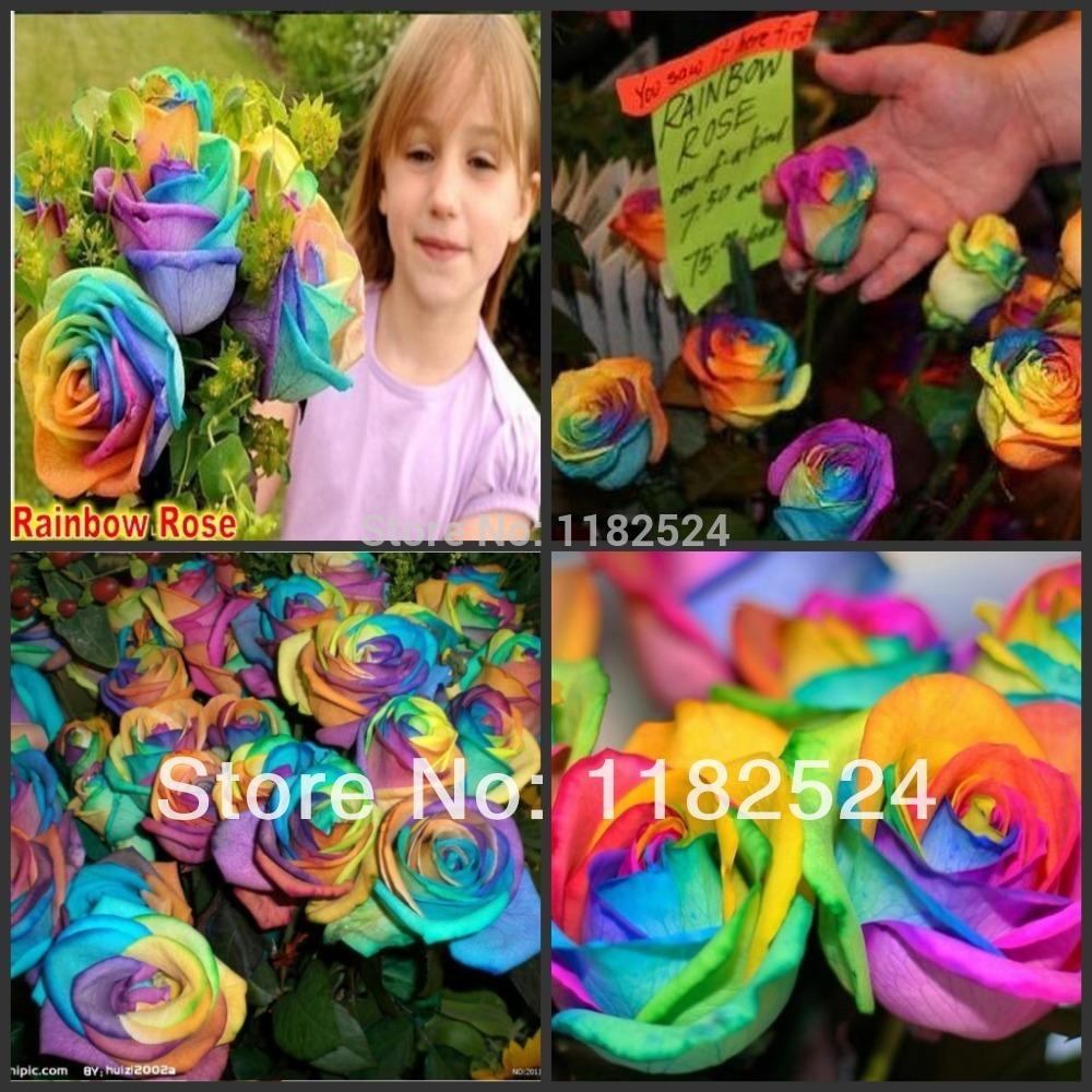 100 seeds rainbow rose seeds bonsai flower plant seeds in for How to plant rainbow rose seeds