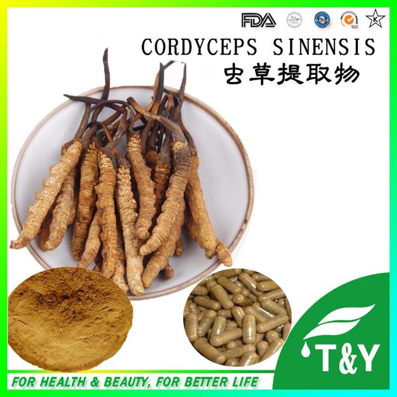 Здесь можно купить  GMP Supplier Anticancer Supplement Powder Cordyceps Sinensis Extract capsules 500mg*300pcs/bag  Красота и здоровье