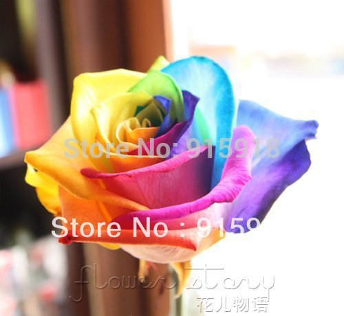 (NOW BUY ONE GET ONE FREE ,YOU WILL GET DOUBLE 400 SEEDS) Rare Holland Rainbow Rose Flower Seed To Your Lover ITEM LABEL:ROSE9(China (Mainland))