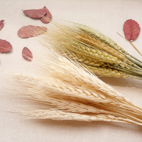 50pcs ear of wheat photography Wedding decoration DIY crafts decorate Artificial flowers Festive Party Real grain ZL7529(China (Mainland))