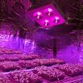 DE CA US Stock Full Spectrum 800w COB Led Grow Light 90 Degree Reflector Cup Medical