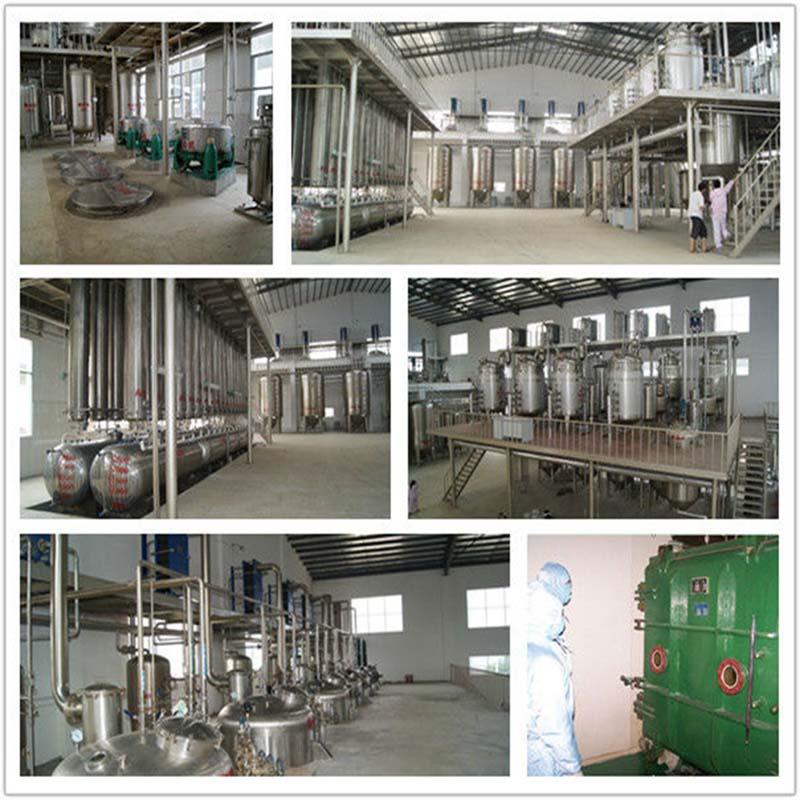 Buckwheat extract / Buckwheat extract powder / organic Buckwheat extract  1000g