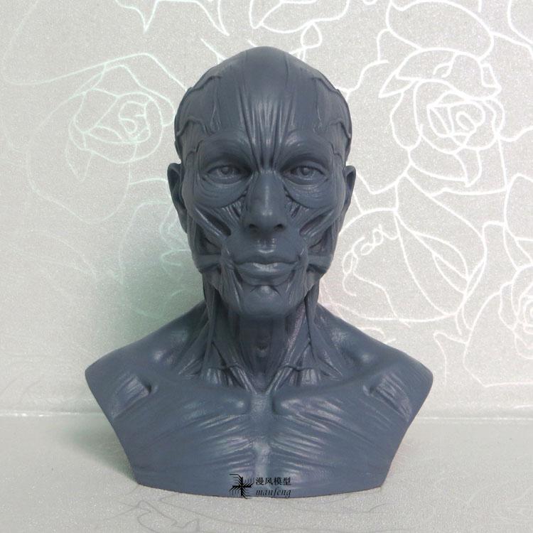 1:3 10cm human skeleton anatomical model skeleton Skull odontologia Head Muscle Bone Medical Artist Drawing medical clothing(China (Mainland))