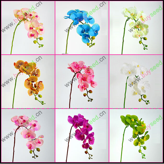 phalaenopsis orchid plant Indoor desktop flowers When flowering, butterfly orchid seedlings about 100 seeds/bag(China (Mainland))