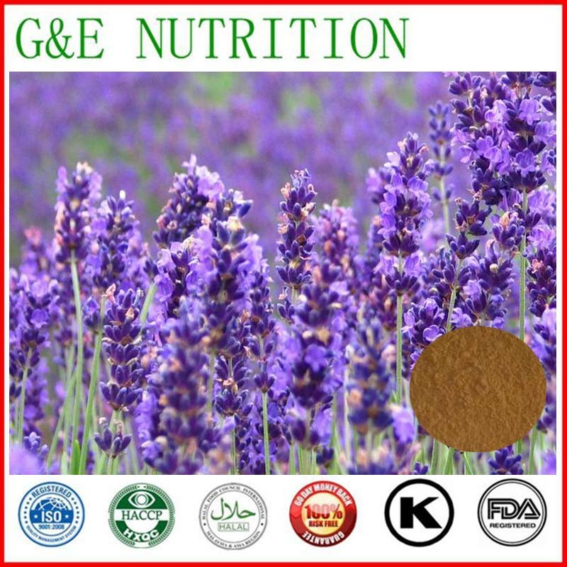 Organic lavender extract powder in herbal extract 1000g