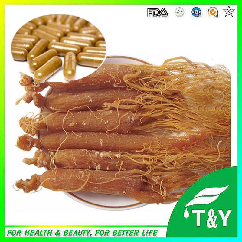 red ginseng extract/panax ginseng extract powder Capsule 500mg*1000pcs