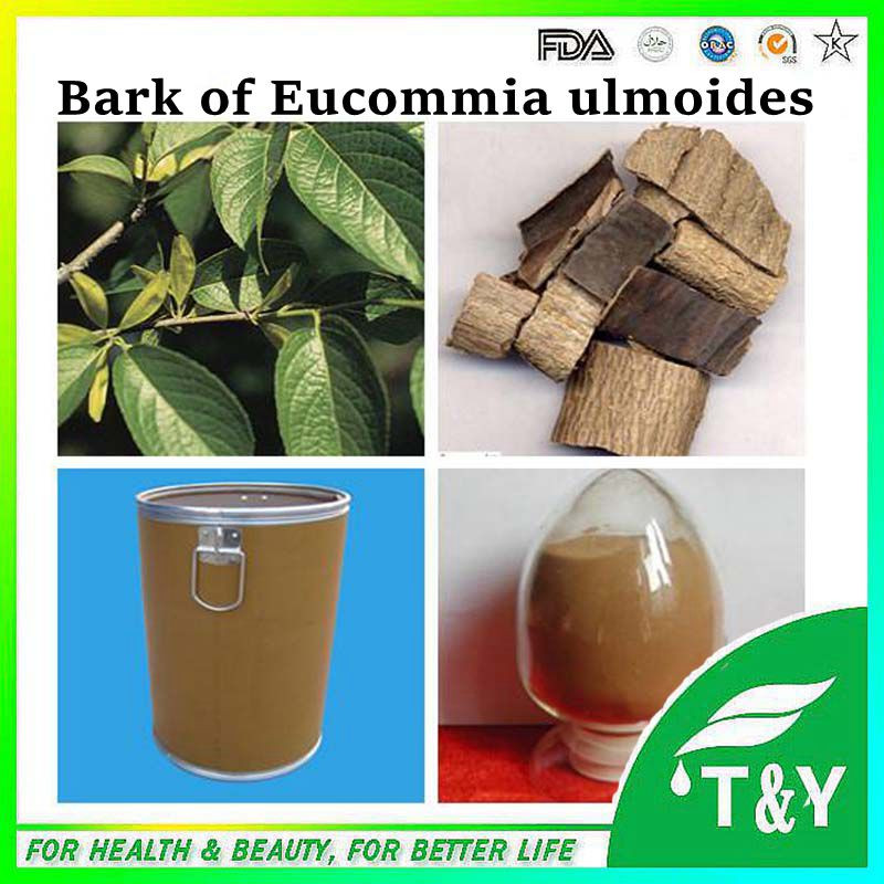 GMP Certificated high quality 100% natural eucommia ulmoides extract