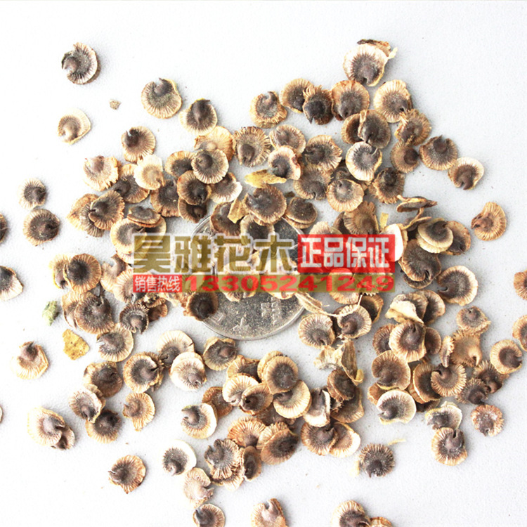 200g / Pack daisy flower seed quality seed ornamental perennial flowers easy maintenance and easy to survive(China (Mainland))