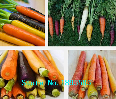 Rainbow Carrot Seeds Vegetable Seeds Daucus Carota Crazy Varieties Fruit Seeds Lose Weight Health Care 100 particles / Pro Pack(China (Mainland))