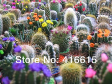 20 Different Cacti Species,200 Seeds- Mixed Cactus Seeds - Cactaceae - Exotic Cacti Plus Mysterious Gifts(China (Mainland))