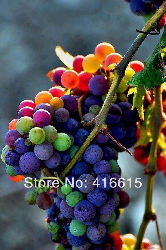 80 seeds / pack, Colorful Rainbow Grape, New Variety color including crimson, black, dark blue, yellow, green, orange and pink(China (Mainland))