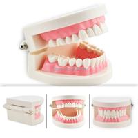 новый модель 1 часть зубов стоматолог плоти розовые десны стандартных зубов зуб научить модель