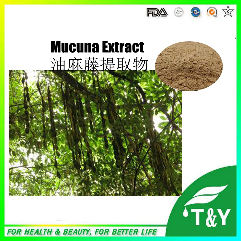 best price GMP OEM factory supply Organic Mucuna pruriens extract powder with  L-Dopa 900g/lot<br><br>Aliexpress