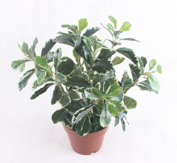 simulation plants artificial plants and flowers Indoor /outdoor decoration - B(China (Mainland))