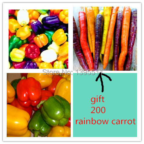 100 rainbow sweet pepper  Seeds,send 200 rainbow carrot  seeds as gift  vegetable  Seeds For Home Garden planting(China (Mainland))