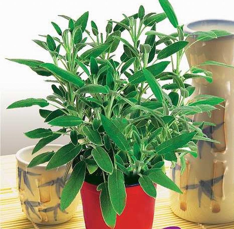 Achetez en gros plantes d 39 int rieur d coratifs en ligne for Plante interieur en ligne