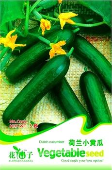 Rare Heirloom Dutch Fruit Cucumber Organic Seeds, Original Pack, 5 Seeds / Pack, Eat it Raw Delicious Fragrant Crisp Fruit C020
