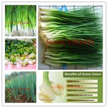 300 китайский зеленый лук семена редкие семена овощных культур для дома посадки Приготовления специй(China (Mainland))