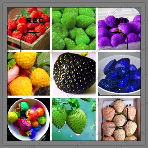 Fruit seeds 1000pcs/bag Super Giant Strawberry perfume bonsai strawberry fruit, home gardening DIY(China (Mainland))