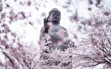 Living room home wall decoration fabric poster Japan city Ushiku garden Sakura trees flowering statue Buddha Amitabha