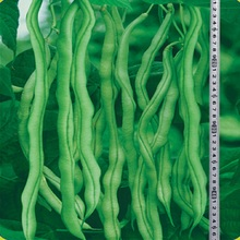 Thailand frame Wang beans seeds 5 Seed organic vegetable seeds(China (Mainland))