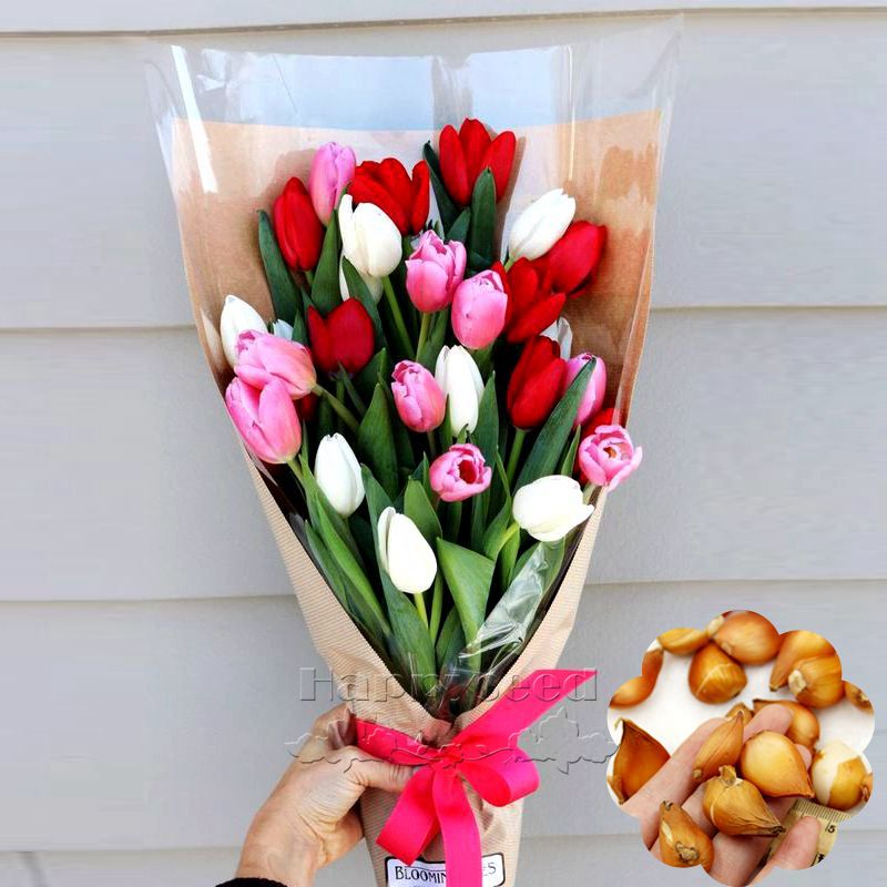 Tulip bulbs,tulip flower,(not tulip seeds),Flowers symbolizes love,tulipa gesneriana flower seeds plant for home garden -2 bulbs(China (Mainland))